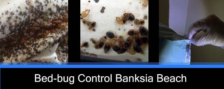 Bed Bug Control Banksia Beach