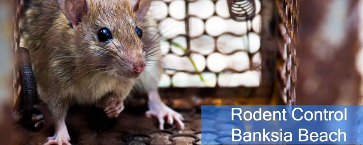 Rodent Control Banksia Beach