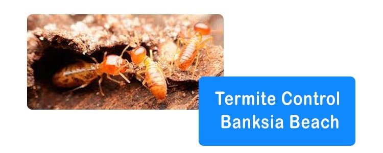 Termite Control Banksia Beach